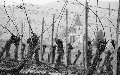 Religious Vines